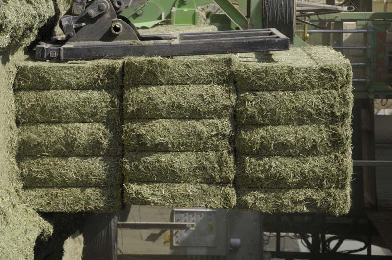 proantocianidinas alfalfa ganado