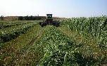 Roundup Ready Alfalfa RR - (GM) gets approval